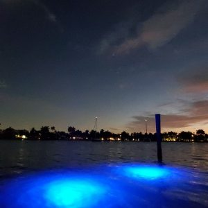 Loomis LED 40 LED Blue Shallow Water Dock Lights