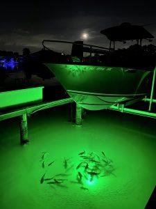 Depth Adjustable Floating Dock Light for Deep Water